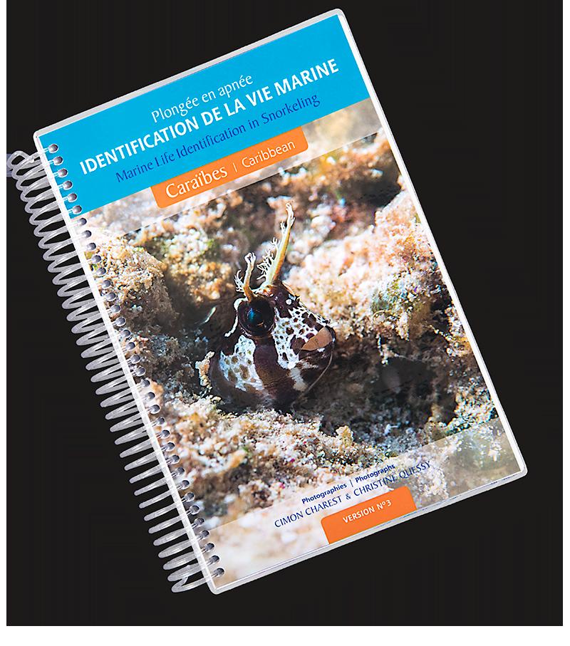 Guide d'identification de la vie marine des Caraïbes