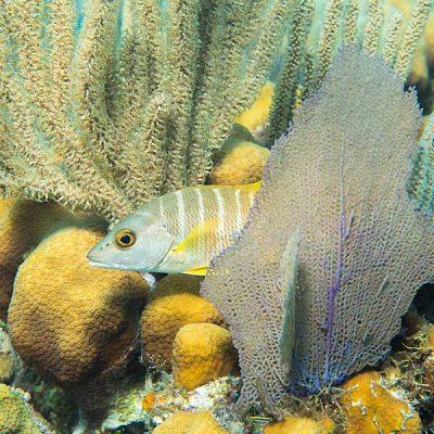 Les Caraïbes sous-marin